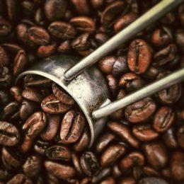 vzorky čerstvě pražené kávy zdarma